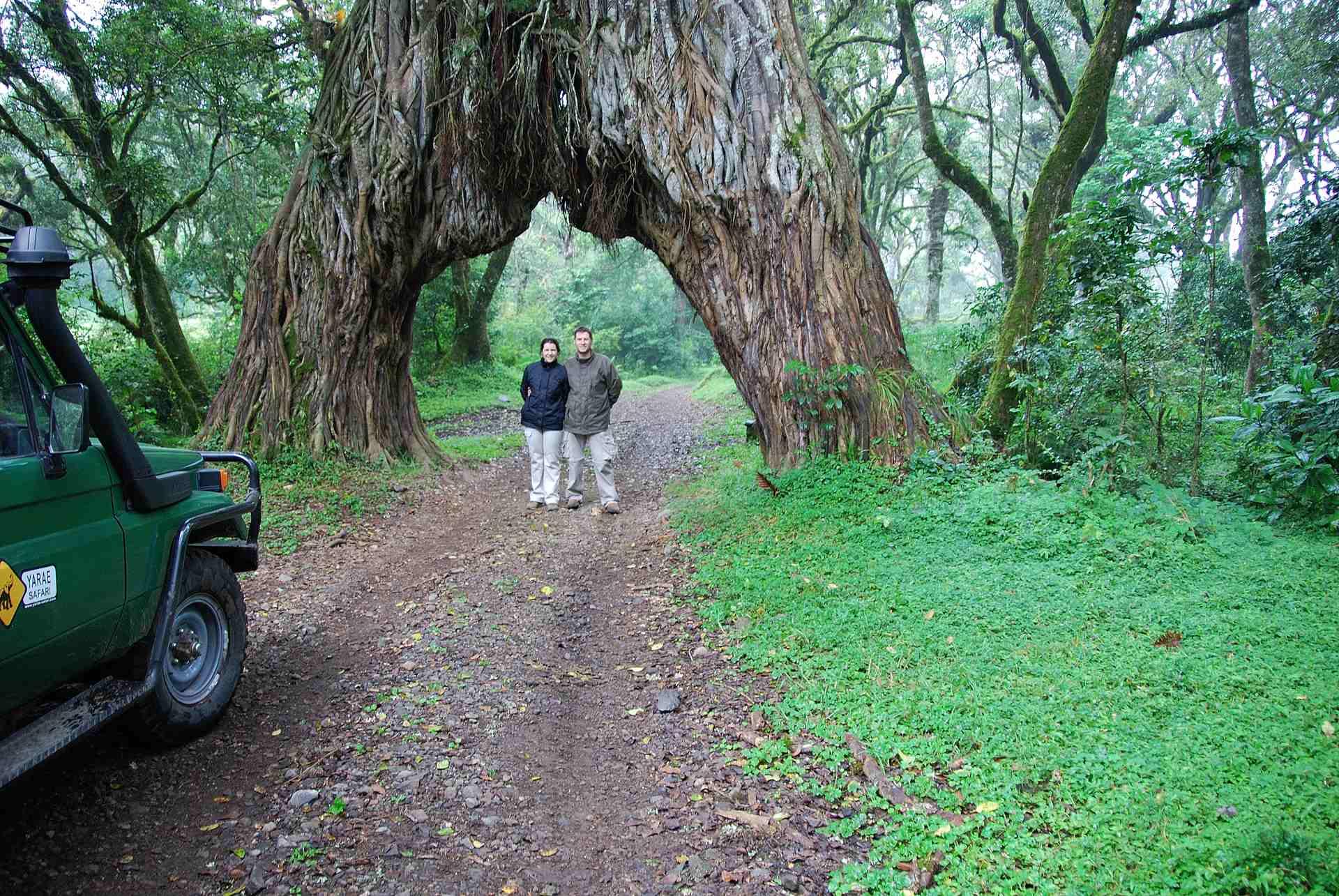 Consejos Safaris por África