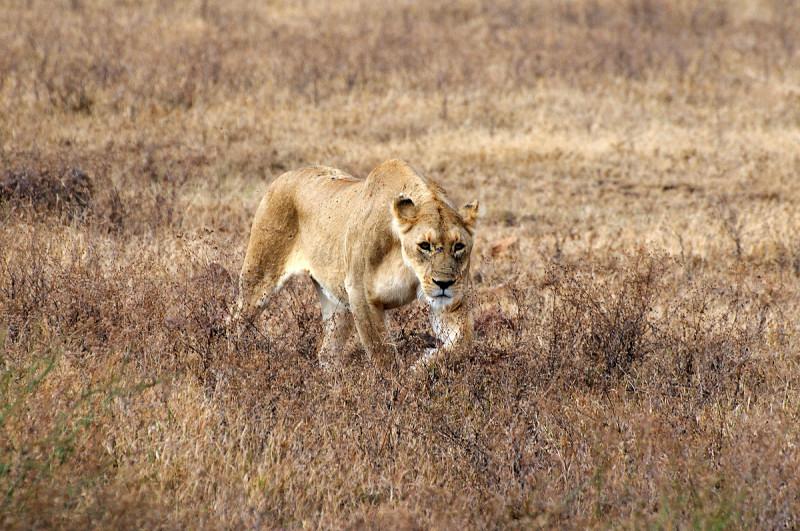 Safari Uganda 13 días