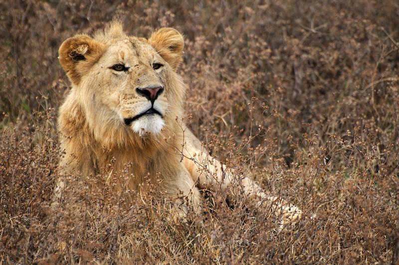 Safari Tanzania Norte y Zanzíbar