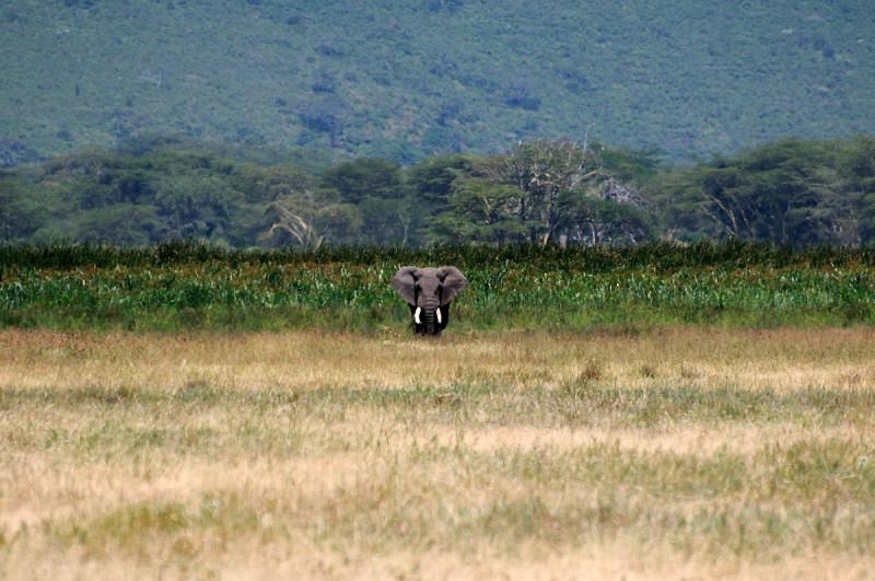 Tanzania Norte 10 días
