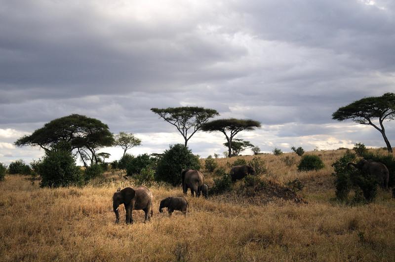Safari Tanzania Norte 12 días