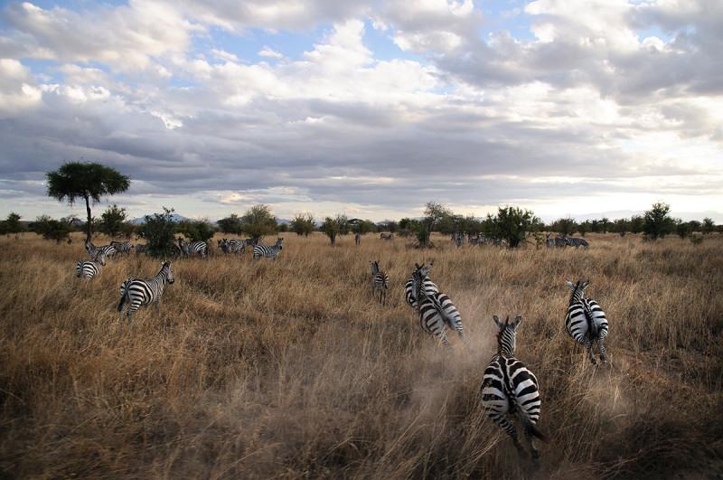 Tanzania Norte 8 días