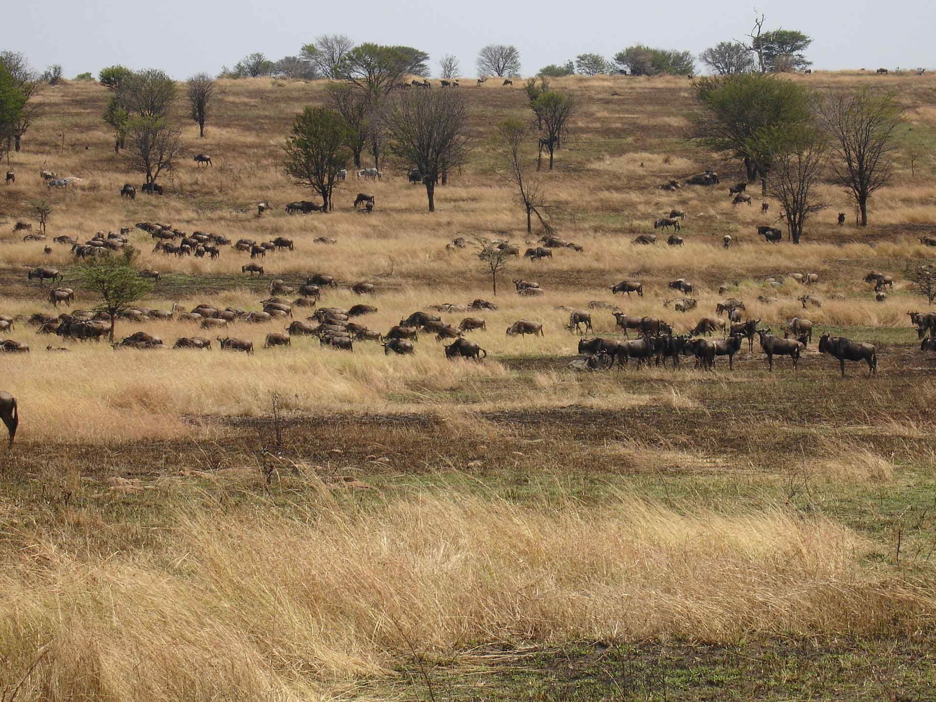 safari serengueti
