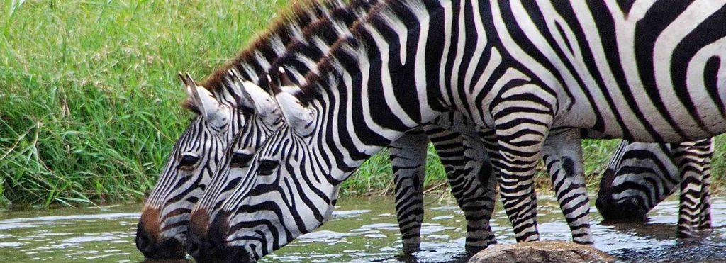 safaris en uganda