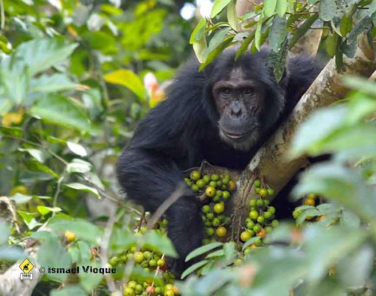 Parque Nacional de Gombe