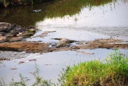 cocodrilos en el rio