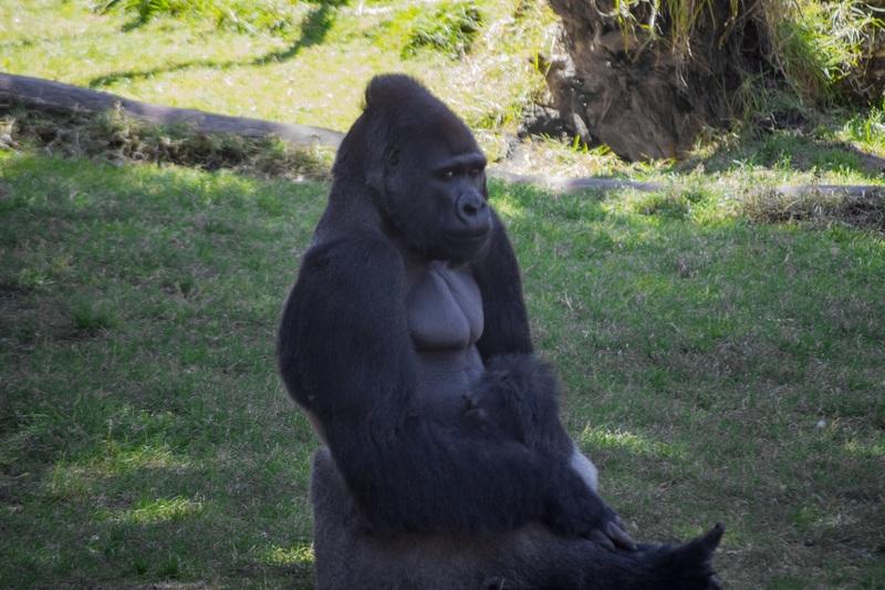 viaje gorilas Uganda
